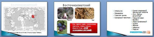 Слайды презентации: Центры происхождения культурных растений
