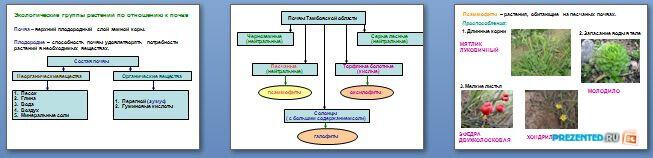 Слайды презентации: Экологические группы растений