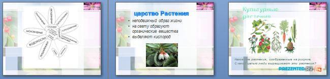 Слайды презентации: Ботаника - наука о растениях