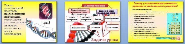 Слайды презентации: Взаимодействие аллельных и неаллельных генов
