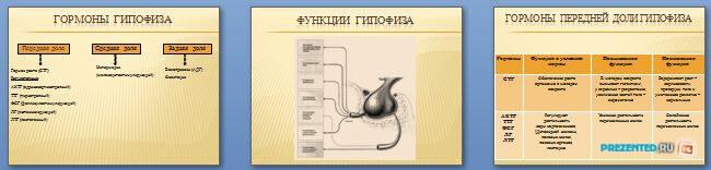 Слайды презентации: Железы внутренней секреции