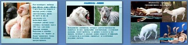 Слайды презентации: Альбинизм