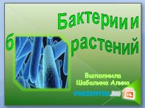 Бактерии и болезни растений
