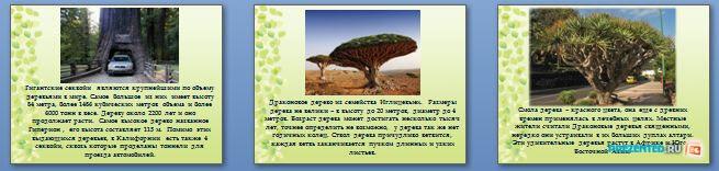 Слайды презентации: Необычные и удивительные деревья мира