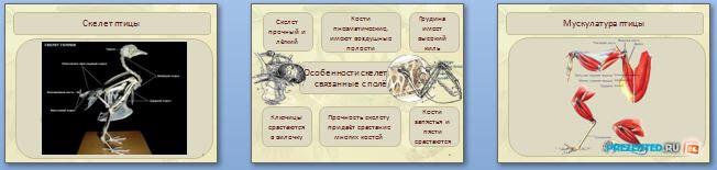 Слайды презентации: Опорно-двигательная система. Скелет и мышцы птиц
