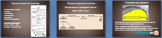 Слайды презентации: Генетический код. Транскрипция