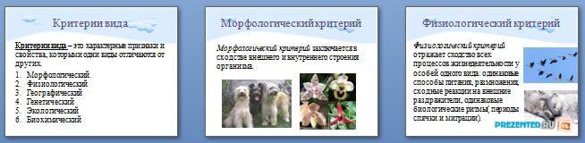 Слайды презентации: Критерии и структура вида