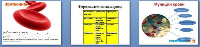 Слайды презентации: Кровь и её функции