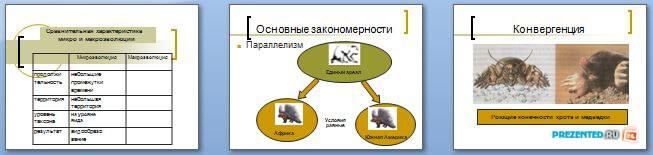 Слайды презентации: Макроэволюция