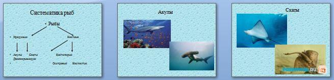 Слайды презентации: Многообразие рыб. Характеристика класса