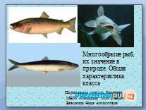Многообразие рыб. Характеристика класса