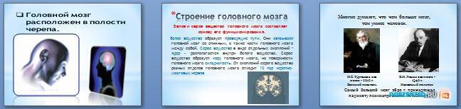 Слайды презентации: Строение и функции головного мозга