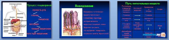 Слайды презентации: Функции тонкого и толстого кишечника