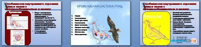 Слайды презентации: Особенности строения птиц