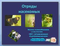 Отряды насекомых