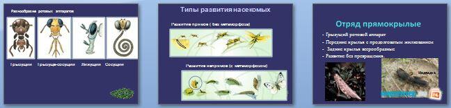 Слайды презентации: Отряды насекомых