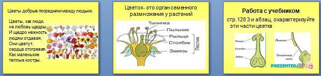 Слайды презентации: Половое размножение организмов