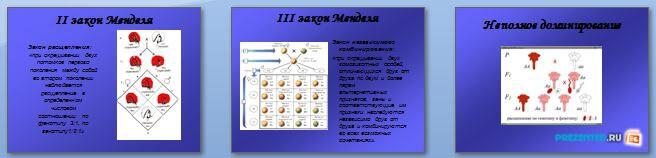 Слайды презентации: Скрещивание и генотип