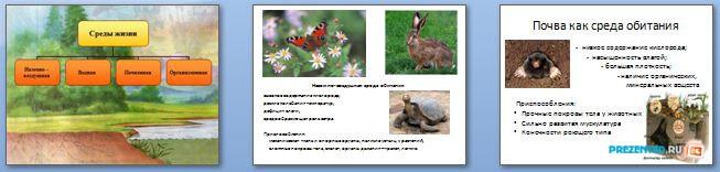 Слайды презентации: Среды жизни организмов