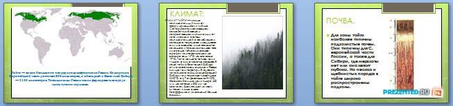 Слайды презентации: Природная зона России - Тайга