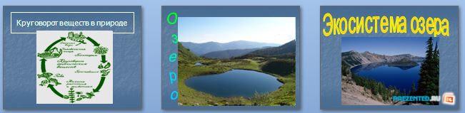 Слайды презентации: Экосистема озера