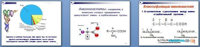 Слайды презентации: Аминокислоты