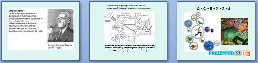 Слайды презентации: Экосистемы